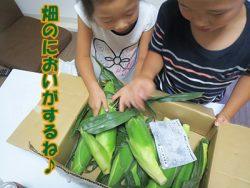 TBS Nスタで特集!鈴木農園のとうもろこしをお取り寄せしました