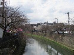 2016年 横浜桜の名所・大岡川の桜開花状況を鶴巻橋から見る