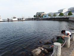 横浜ベイサイドマリーナはショッピングだけじゃないカニ釣りの穴場です