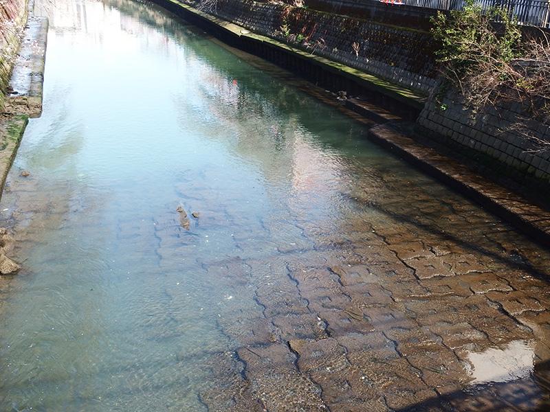 大岡川の生き物 干潮