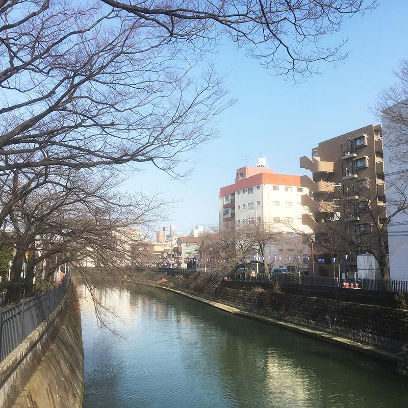大岡川 2018桜祭り