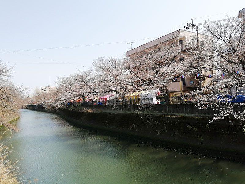 大岡川の桜まつり 3月27日